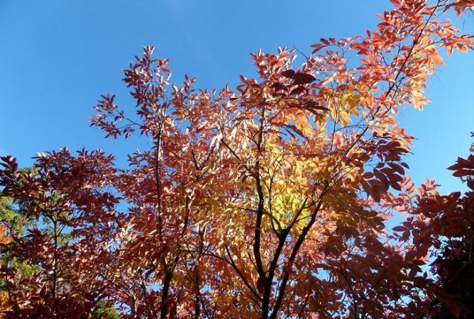 arbres parking automne