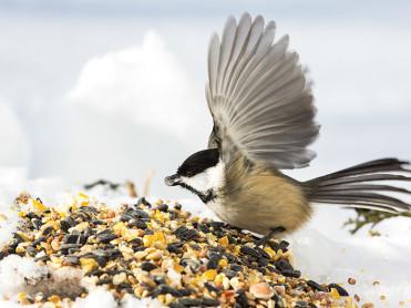 oiseau graines