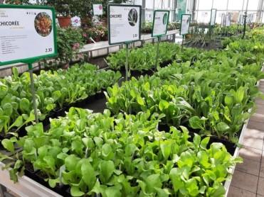 salades d'hiver 2021-02